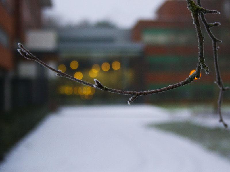 Frozen Limb