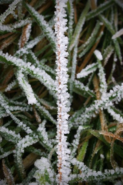 Hard Frost