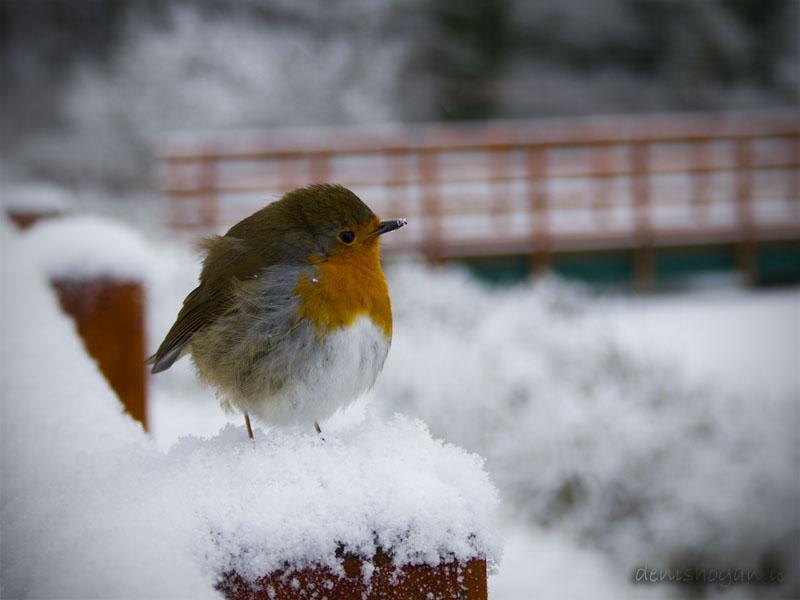 The same Robin!
