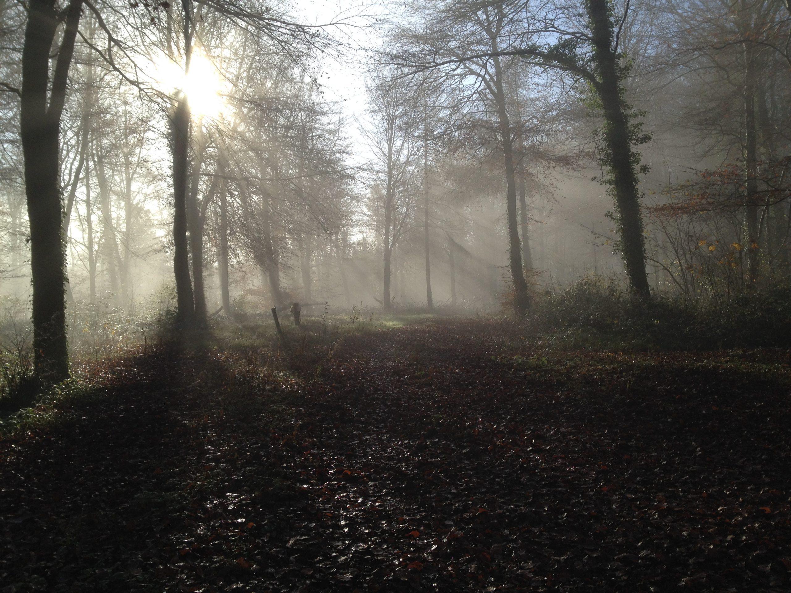 Autumn in Curraghchase II